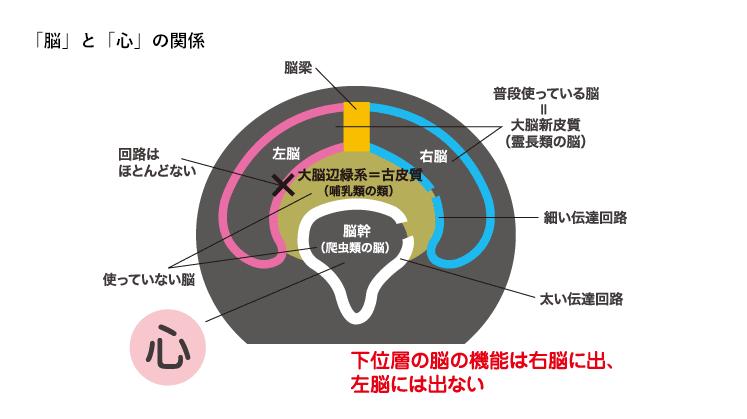 「脳」と「心」の関係